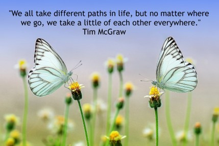 Butterfly---Tim Mc Quote