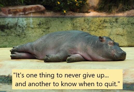 Hippo + quote
