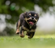 Enthusisatic Pup