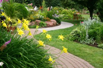 Walk-edged-daylilies