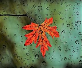 leaf. life hk