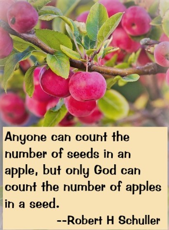 Apple Seed Quote