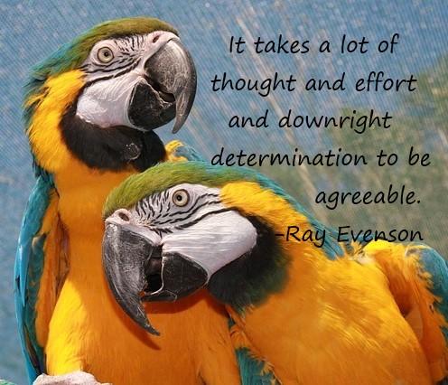 Parrots + Quote