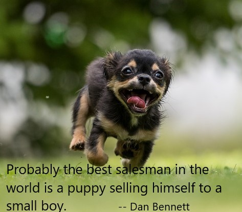 Puppy + Quote