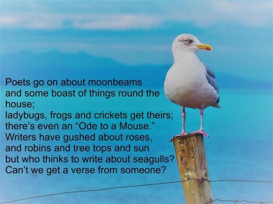 Sea Gull poem