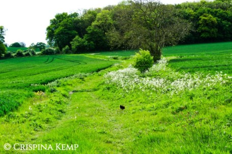Green field-in-may