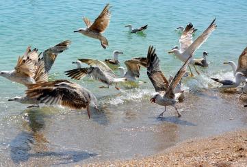 Seagulls + beach.Adina Voicu.jpg