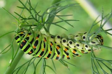 caterpillar-4450725_640