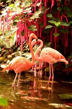 flamingos-1271405_640
