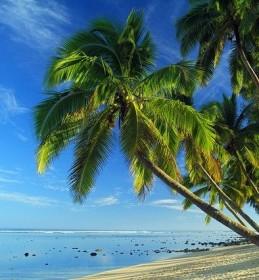 palms-3242342_640