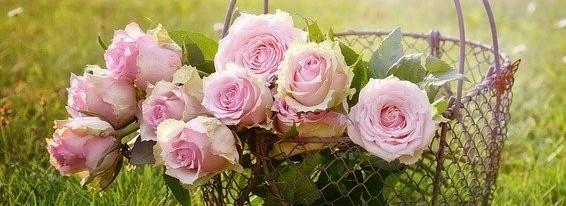 H.Roses.Rebekka