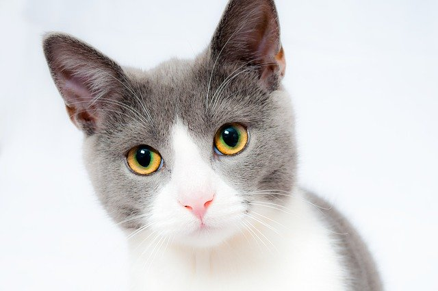 cat-1151519_640
