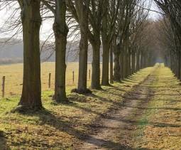 Path.Andreas Lischka