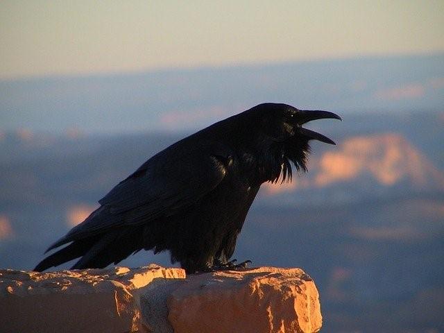 Raven rock.skeeze