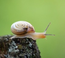 Snail.Bellezza87