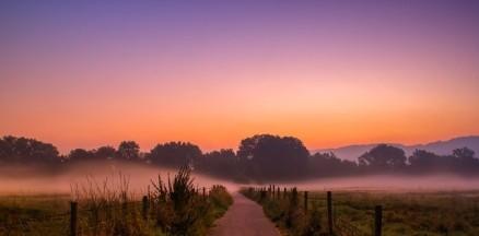 Dawn.analogicus