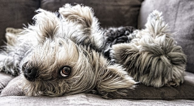 dogs-2597201_640