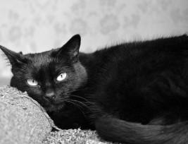 Cat.Angus.Alina Kuptsova