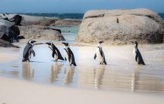 Penguin.MichaelLuenen