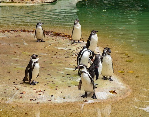 Penguin.Romanflavier