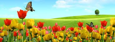 H. Tulips