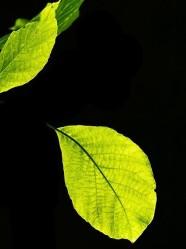 Leaf falls.Couleur (2)