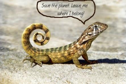 reptile-3110174_640